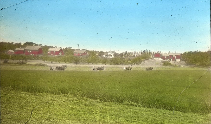 Hand-colored photograph of four teams of horses mowing alfalfa hay. Cornfalfa Farms collection, New Berlin Historical Society.