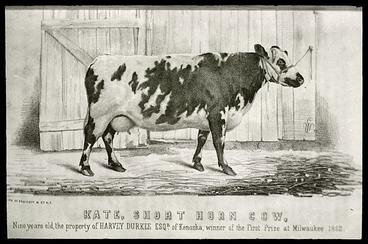 """Kate"", short horn cow owned by Harvey Durkee, Kenosha. From Volume 2 of the Transactions of the Wisconsin Agricultural Society of 1852, published in 1853. Kenosha County Historical Society."
