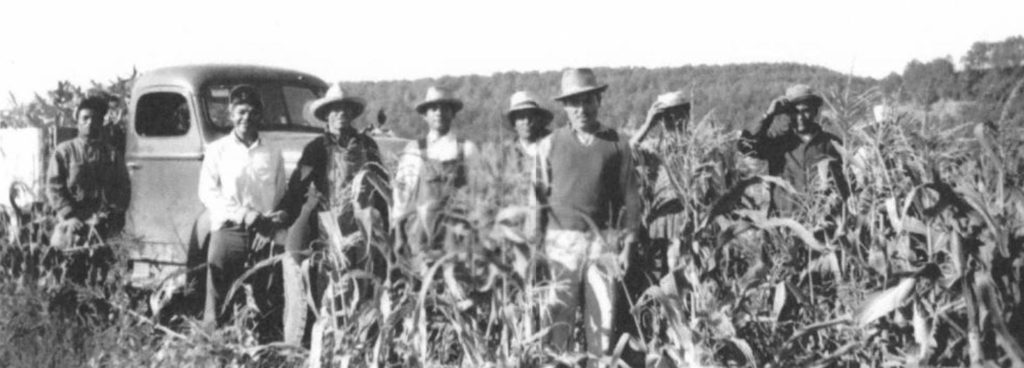 Photograph of migrant workers in a cornfield near Mauston, Wisconsin