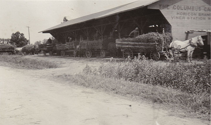 Photograph showing four wagons full of peas being unloaded by men at the Horicon branch of the Columbus Canning Company.